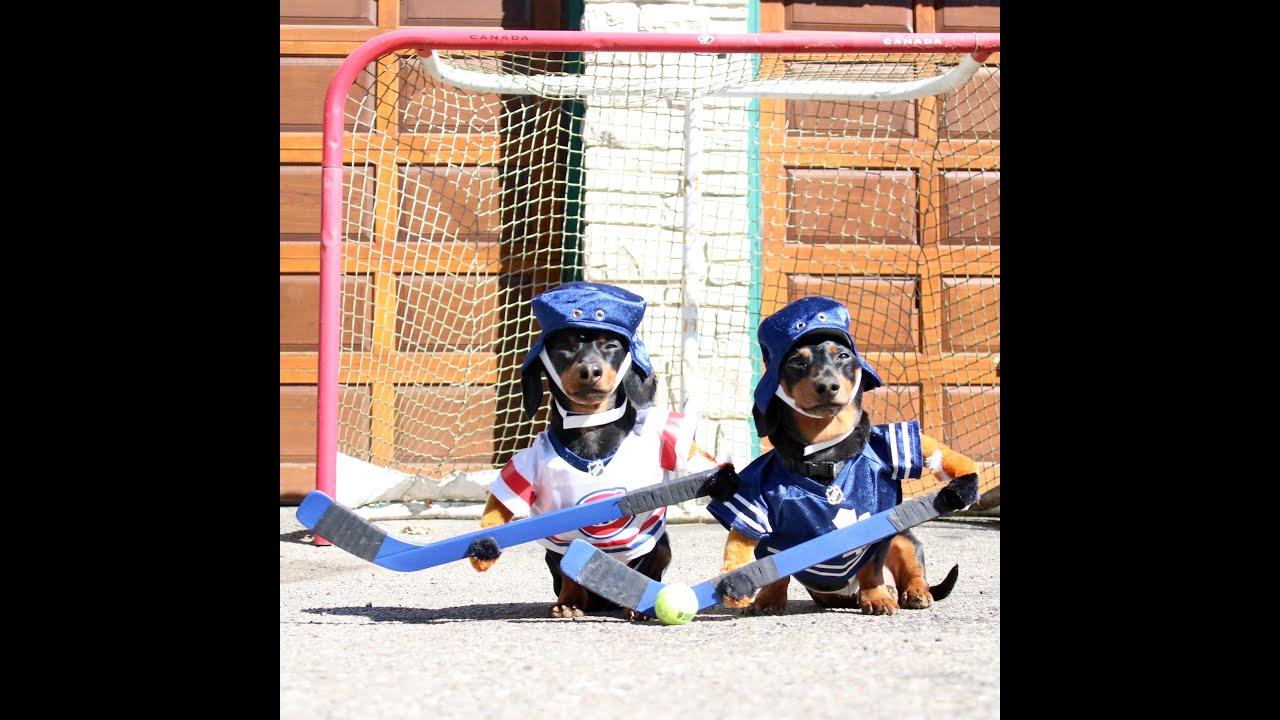 crusoe u0026 oakley dachshund play ball hockey youtube