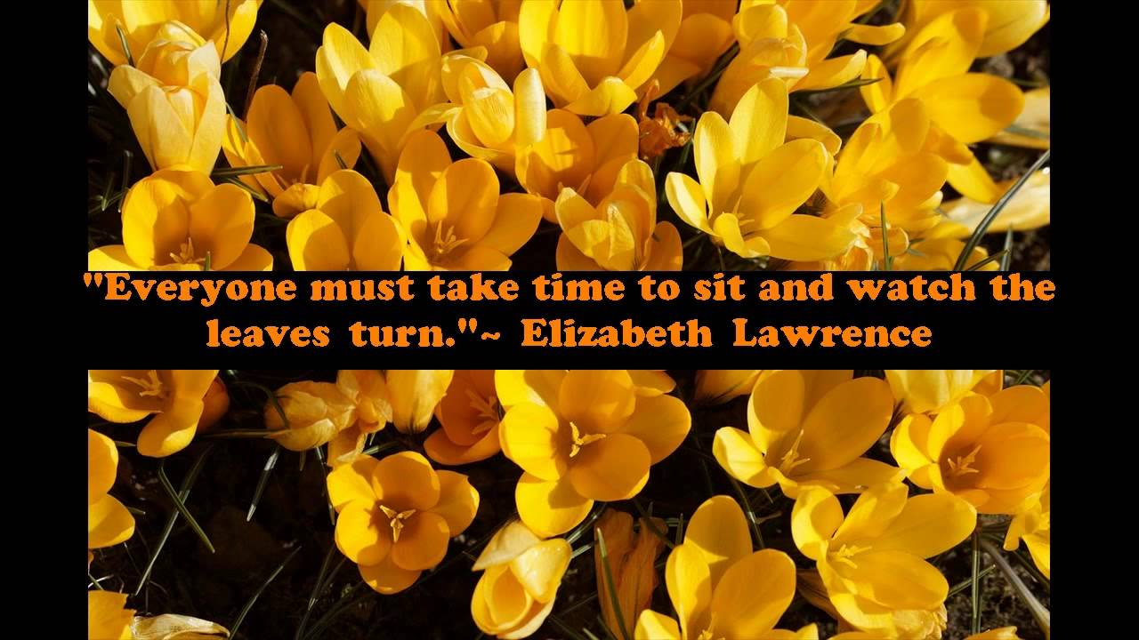 Quotes About Fall Leaves Quotes About Leaves In Fall Youtube