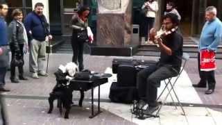 Violinista chileno con su marioneta. Es genial!!!
