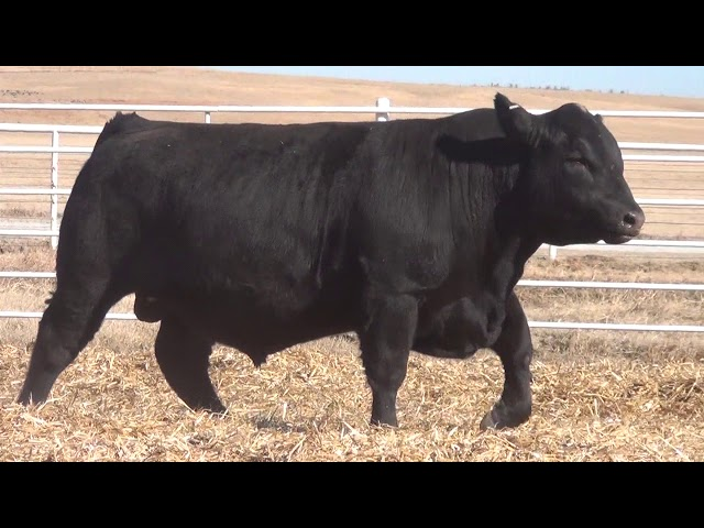 Express Ranches Lot 120