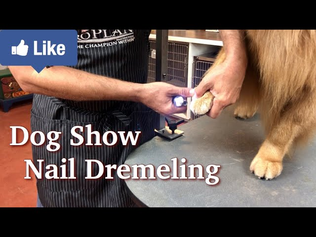 Learn Nail Dremeling from Pros