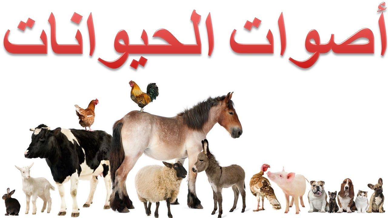 أصوات الحيوانات Youtube