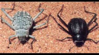 anthropods