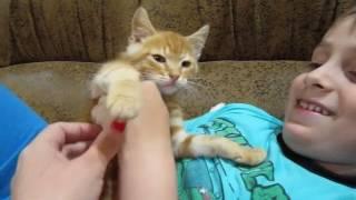 Рыжий котенок. Нашли рыжего котенка)