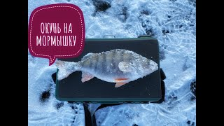 Отличный клев окуня Зимняя рыбалка 2019 2020 Окунь на мормышку