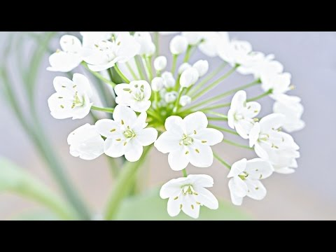 Beautiful Spring Music - Spring Snow
