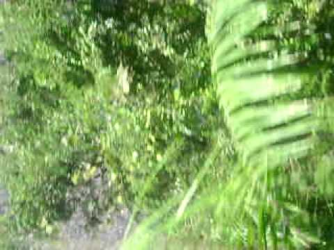 Jungle Porn Video