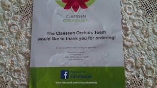 Орхидеи из Голландии