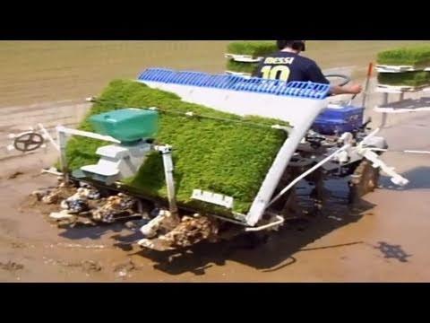 Planting Rice in Japan!