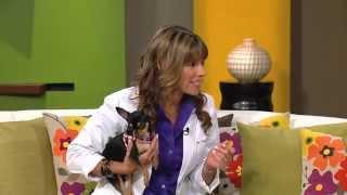 El Cuidado del perro Chihuahueño / Care of the Chihuahua