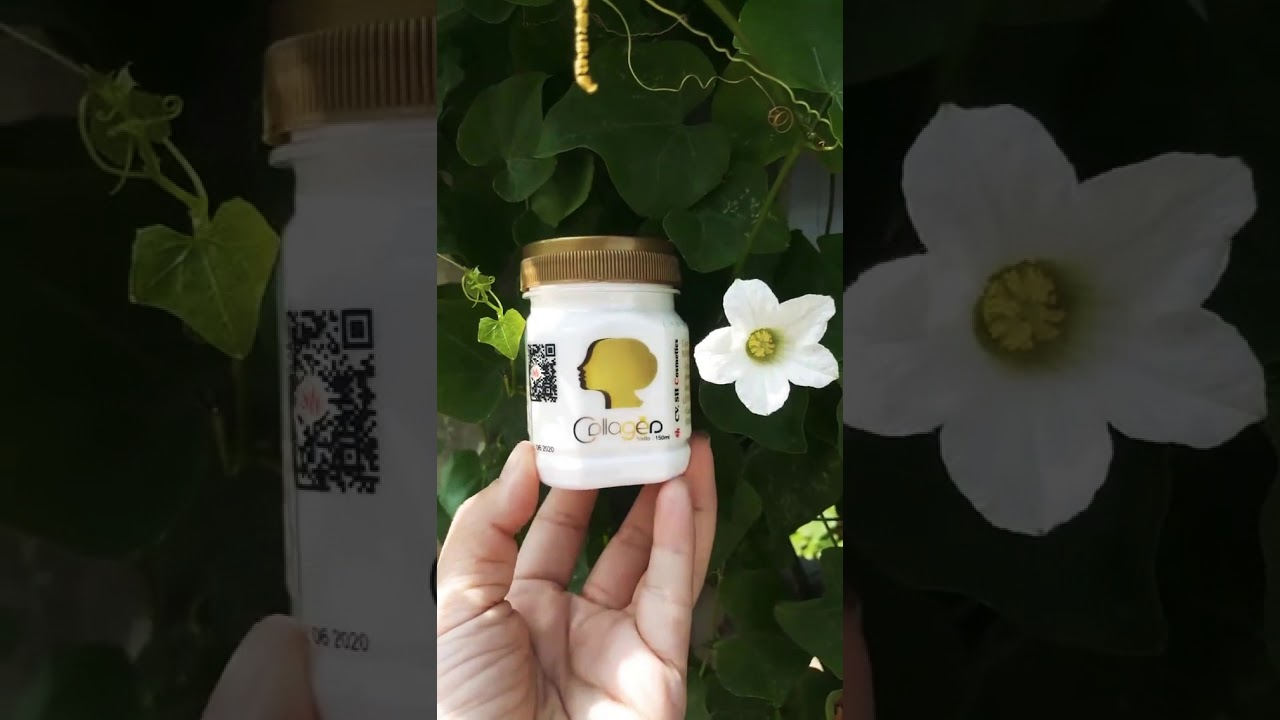 Bibit Collagen Original Cv Sh Cosmetics Youtube