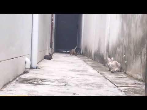 Best Cat escape!!! #Run#cat#jump