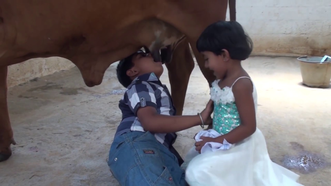 Kids Drinking Fresh Milk From Indian Cow Breast - Youtube-8713