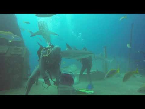 Shark diving adventure dive - bahamas