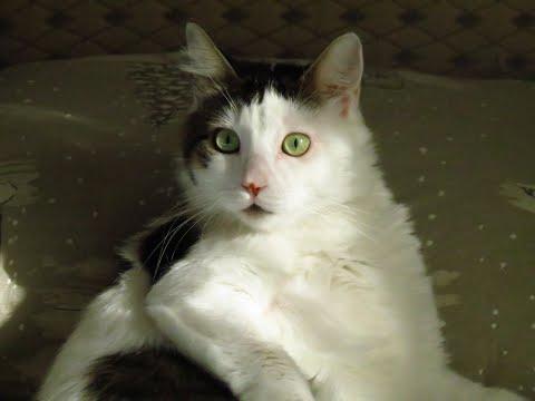 Masajı seven kedi ŞANS