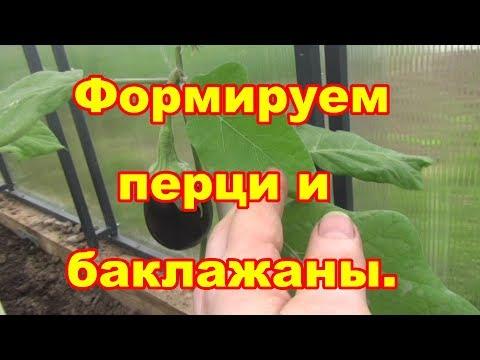 Как формировать перцы и баклажаны видео