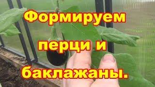 Как формировать перцы и баклажаны чтобы в ИЮНЕ снять первые плоды