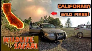 Took My Crown Vic To A Wild Life Safari! Crown Rick Auto
