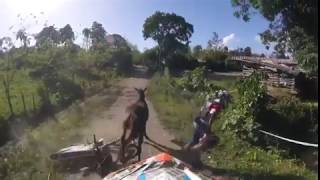 WTF... Crash of one horse with a motorcycle