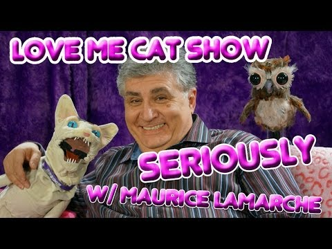 The Love Me Cat   Seriously with Maurice Lamarche