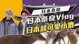 這群人 展榮展瑞 #12│【旅遊系列】日本超可愛奈良餵小鹿 thumbnail