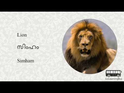 Learn Malayalam Visual Dictionary - Animals via Videos by GoLearningBus(3K)