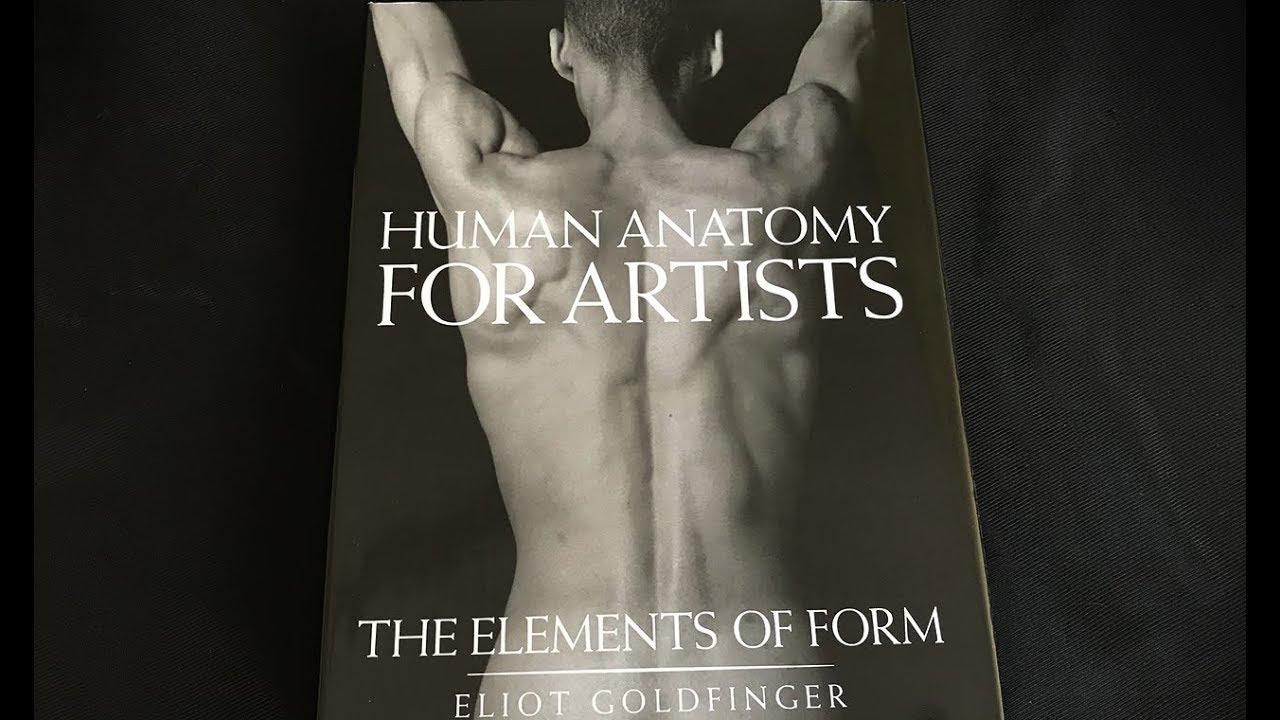 Human Anatomy For Artiststhe Elements Of Form Youtube
