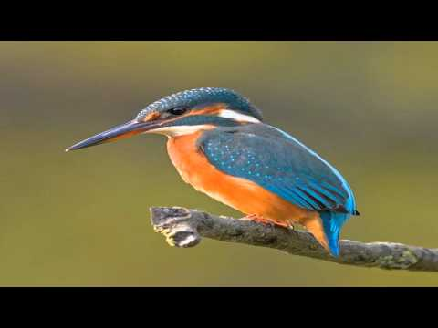 As Kingfishers Catch Fire, Dragonflies Draw Flame - Keith Moss
