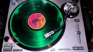 Viva Piñata: Side C | Vinyl Rip (iam8bit)