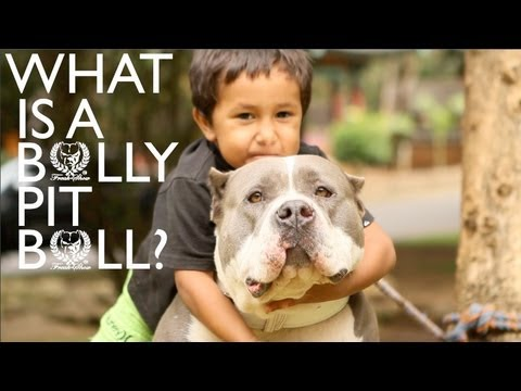 What is a Bully Pitbull? | FreakShowBullys.com