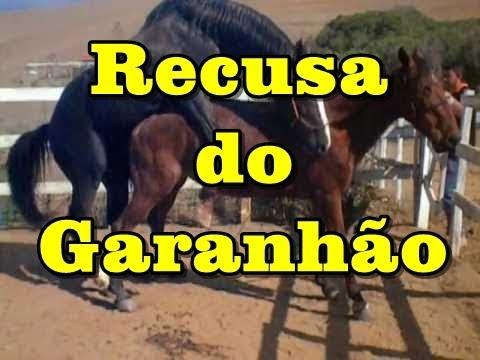Garanhão Turbante JO, recusa de cobertura cavalo...Stallion Turban J.O  refuse coverage, horse #1