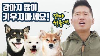 동생 강아지 입양해도 될까요??(feat. 강형욱 훈련사님) / 시바견 곰이탱이여우와 댕댕런 다녀왔어요