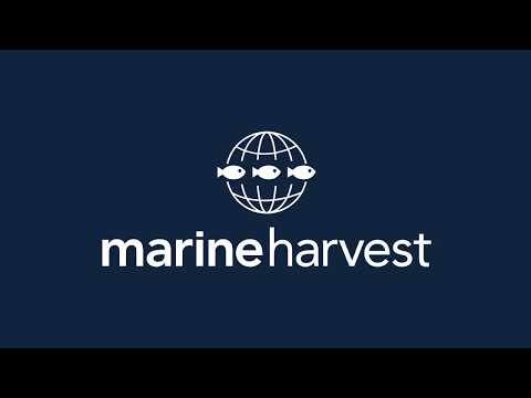 What it's like to work at Marine Harvest, Rosyth
