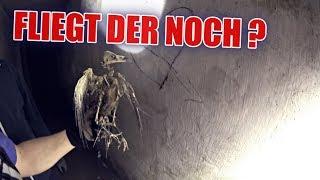 LOSTPLACE : Krankenhaus-Bunker voller Vogelskelette ! | ItsMarvin