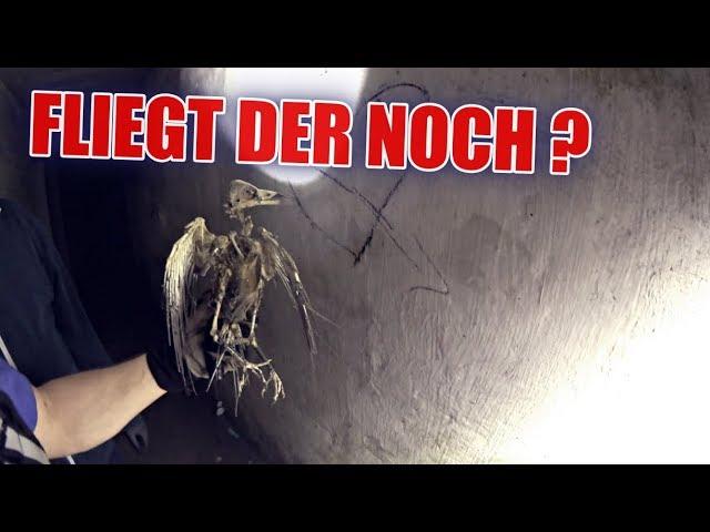 LOSTPLACE : Krankenhaus-Bunker voller Vogelskelette !   ItsMarvin