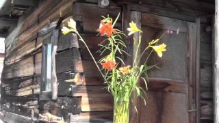 видео Пёстрый букет тюльпанов - лучший подарок для возлюбленной!