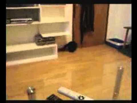 macja dresura,tigy,smijesna macka,funny cat,smart cat,pametna macka