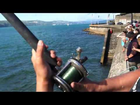 Extreme Kingfish Hunting - Man vs Wild Fishing