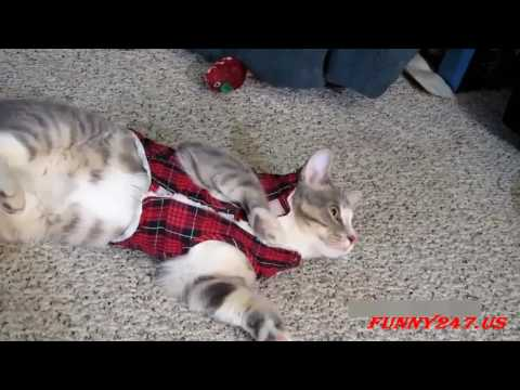 Funny Cat Videos [2]