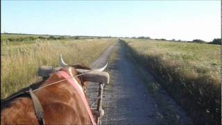 The Historic Pembina Trail by Ox Cart