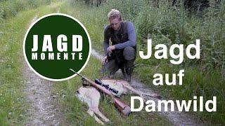 Baixar JagdMomente | Folge 3 | Jagd auf Damwild und Reh im Frühsommer