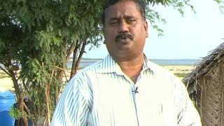Pasumai Neram - Nandu Valarpu (crab rearing)
