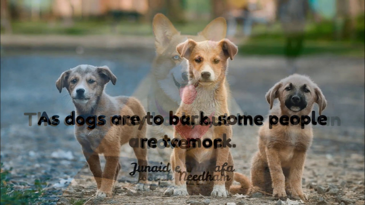 Best Cute Puppy Quotes about Puppies