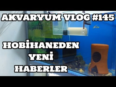 Akvaryum Vlog #145 (Hobihaneden Yeni Haberler)