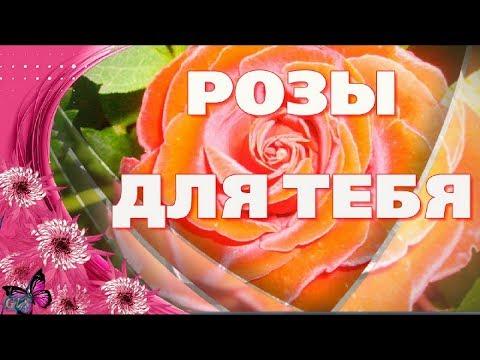 РОЗЫ ДЛЯ ТЕБЯ Дарю тебе я много роз Красивые музыкальные Видео открытки