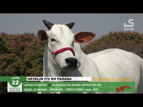 Lote 22 Hevelin FIV do Parana