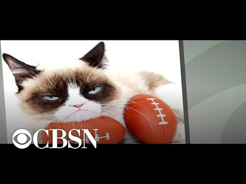 Monica Lowe  - GRUMPY CAT, THE INTERNET SENSATION HAS DIED AT THE AGE OF 7. HERE'S HOW