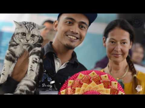 KELAB KUCING MALAYSIA - Pets Lover Fiesta 2018 International Cat Show - Part 11/11