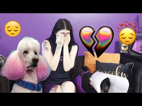 My Dog Phaedra Died thumbnail