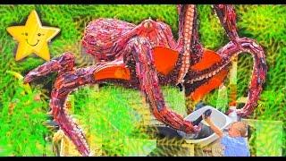 Видео Для Детей ОГРОМНЫЙ Зоопарк в Городе Вашингтон Много Животных Влог Макс Играет в Парке